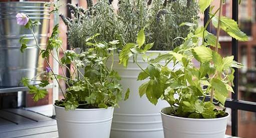 novedades ikea en jardineria plantas maceteros enrejados