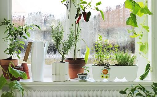 jardineria ikea