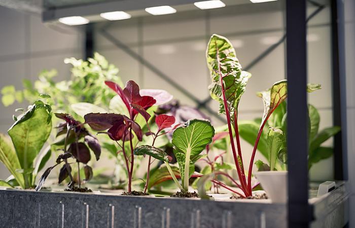 invernadero ikea indoor gardening